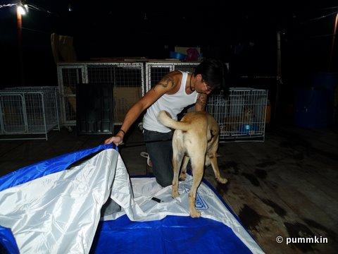 Tentbuilding Dog