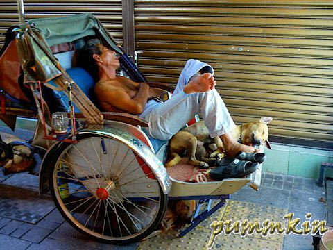 Three dogs sleeping with trishaw peddlar
