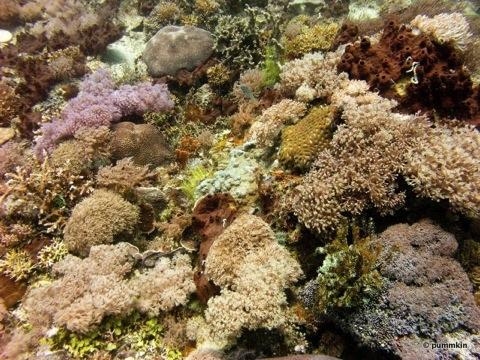wpid-coral-12-2010-08-3-15-17.jpg