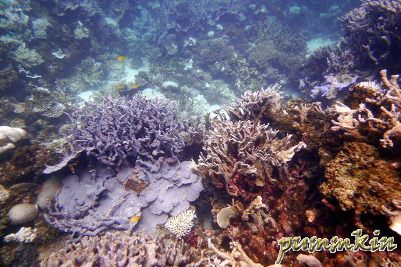 wpid-P1170393-2011-04-1-16-453.jpg