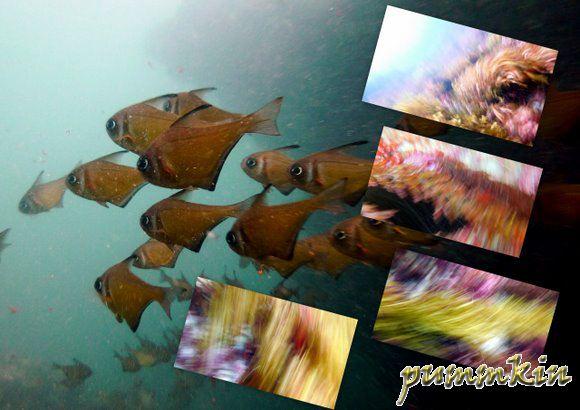 wpid-wpid-wpid-ArtisticMotion-2011-03-17-19-282-2011-03-17-19-28-2011-03-17-19-28.jpg