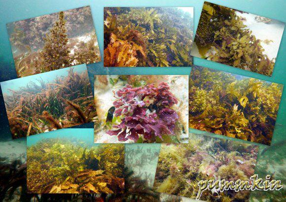 wpid-wpid-wpid-Seaweed-2011-03-17-19-282-2011-03-17-19-28-2011-03-17-19-28.jpg
