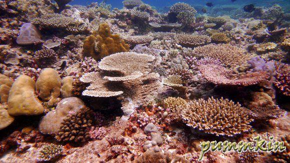 wpid-Corals-2011-05-21-15-47.jpg