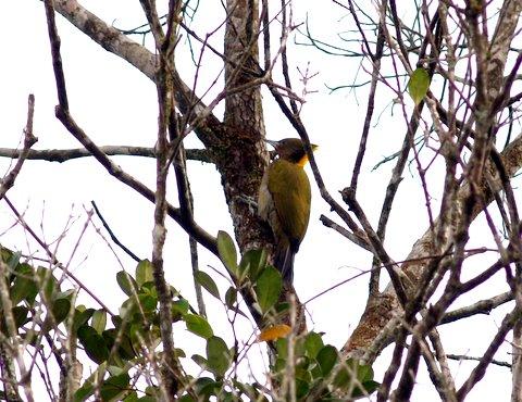 wpid-woodpecker.JPG-2006-10-19-19-031.jpg