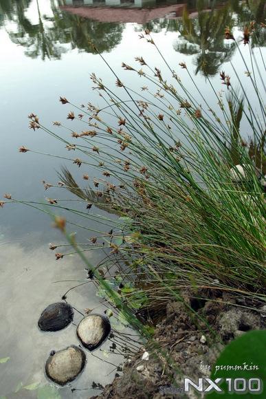 wpid-Weeds-2011-08-23-15-06.jpg