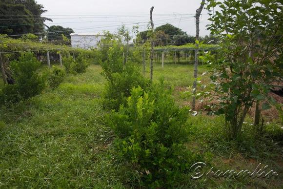 wpid-07098052-2012-08-5-00-06.jpg