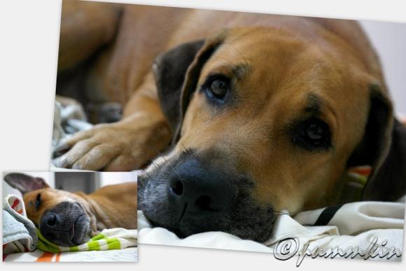 wpid-Rufus-2012-11-25-22-46.jpg
