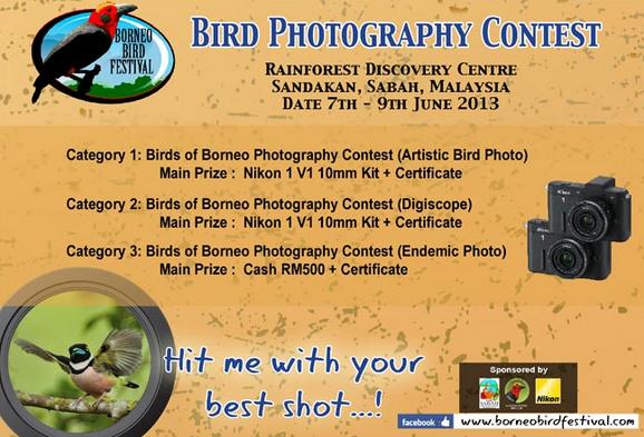 wpid-birdphotogcontest-2013-05-23-09-38.png