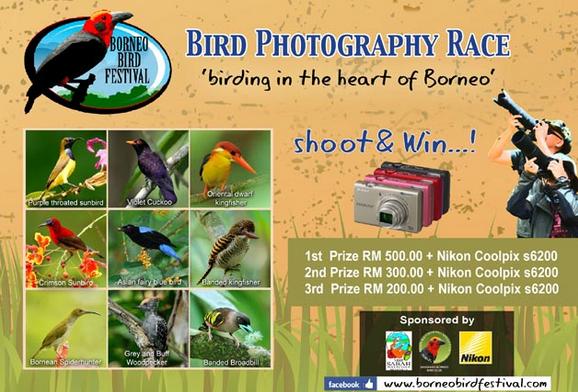 wpid-birdphotograce-2013-05-23-09-38.png