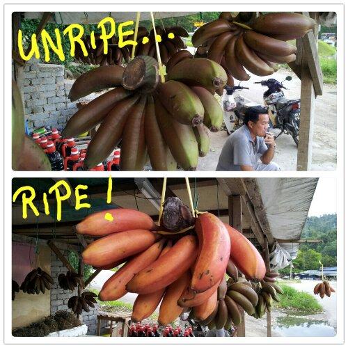 wpid-2012-09-22-11.30.14.png-2012-09-22-11-34.jpg